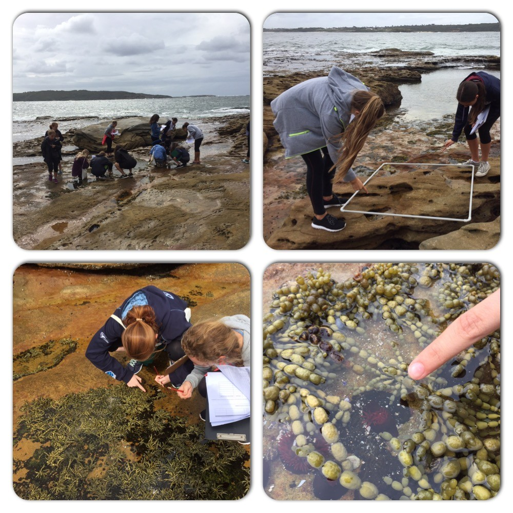students investigating a rock platform