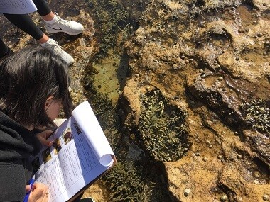 students looking at the rock platform