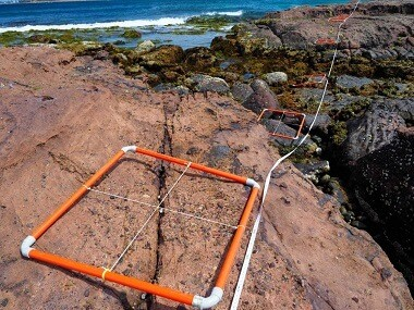 using a quadrat on the rock platform